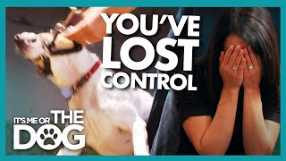 Owners' Stress and Impatience Impact their Dog | It's Me or The Dog