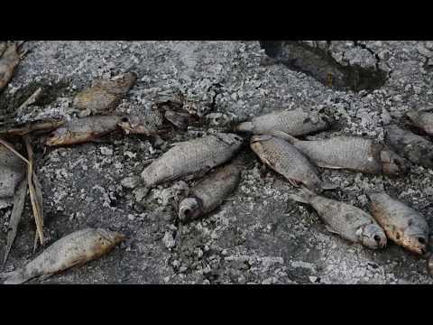 الجفاف يتسبب بنفوق عشرات الآلاف من الأسماك  - نشر قبل 51 دقيقة