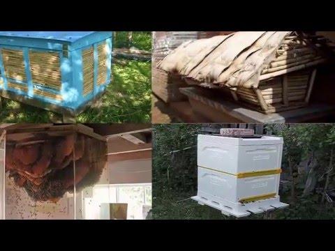 Пчеловодство своими руками видео фото 241