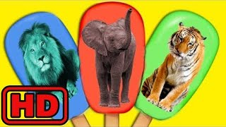 Kid -Kids -Learn Colors And Animals With ZOO Animals Ice Cream Popsicles For Kids/Zoo Animals Learn