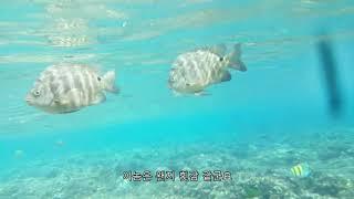 [조이여행]괌 건비치, 물 반 고기 반
