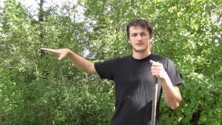 Как собирать грибы в лесу / How to pick up mushrooms in the forest
