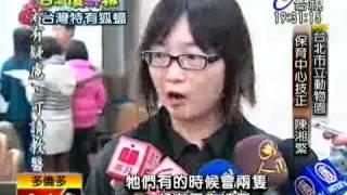瀕臨絕種台灣狐蝠現身龜山島
