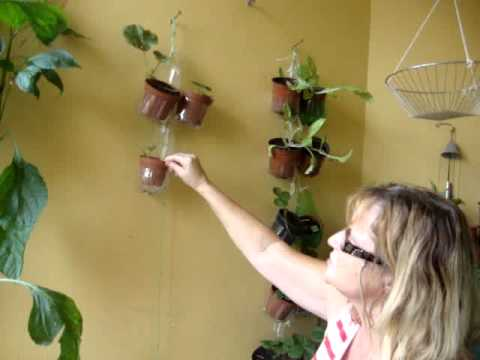 Hanging Wall Plant Holders