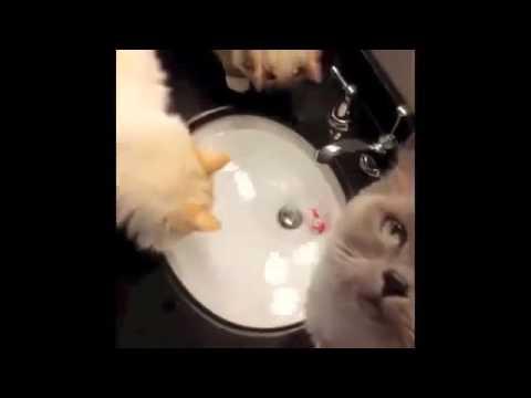 Funny Kitten Videos