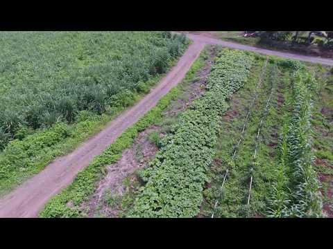 Vegetable Garden, Tavarau, Ba, Fiji Islands - Phantom 4