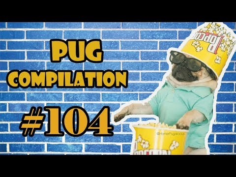 Pug Compilation 104  - Funny Dogs but only Pug Videos | Instapugs