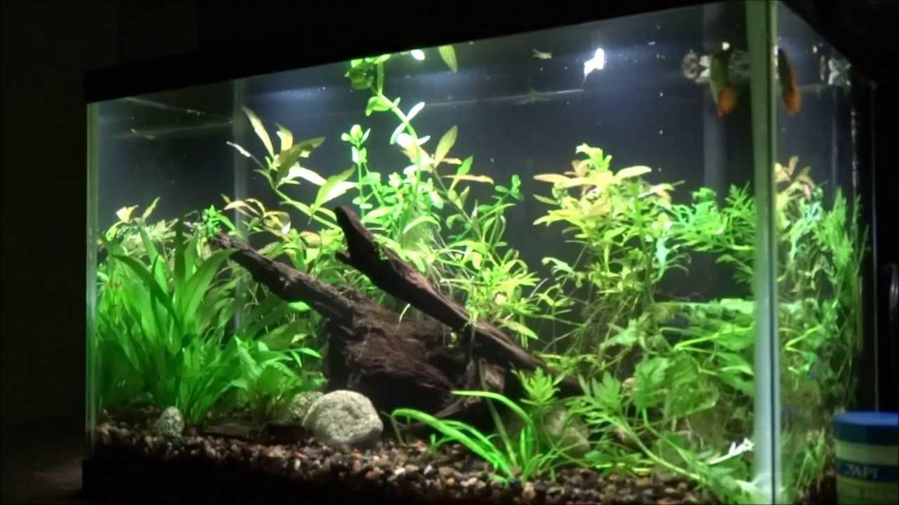 Fish Tank Wallpaper Hd 10 Gallon Planted Tank Youtube