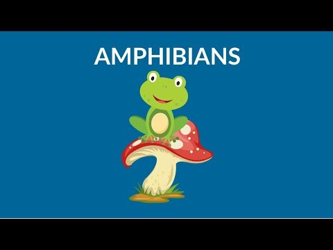 Learn About Amphibians || Amphibians Animal  || Types Of Amphibians