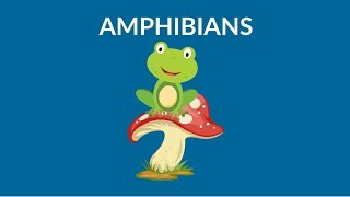 Which animals are amphibians? Learn about Amphibians || Types of Amphibians