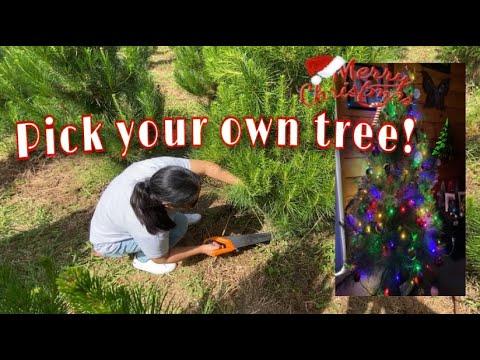 Choosing our Christmas Tree! #christmas2020 #NZchristmas #firstTime