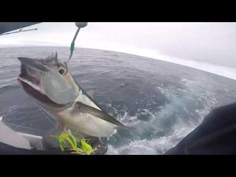 Albacore Tuna Fishing Winter Harbour B.C 2019 Sept 1