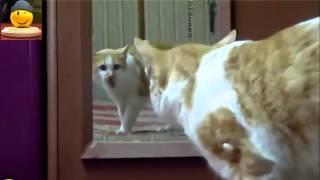 Смешное видео про кошек - Супер видео приколы! Забавные кошки (выпуск 9)