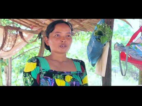 Moringa Documentary (Cambodia)