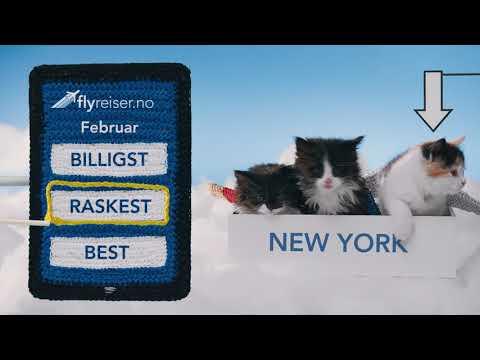 Flyreiser.no - Kattene 2.0 (30 sekunder)