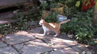 Рыжий котенок на даче