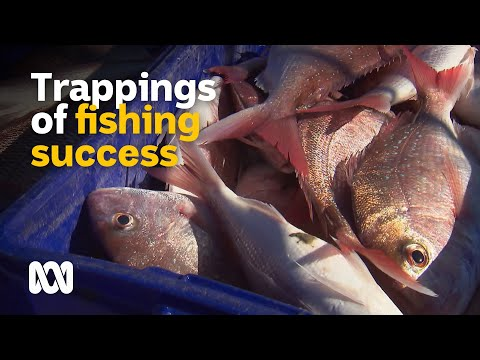 Trappings Of Professional Trap Fishing Success 🐟 | Landlife | ABC Australia