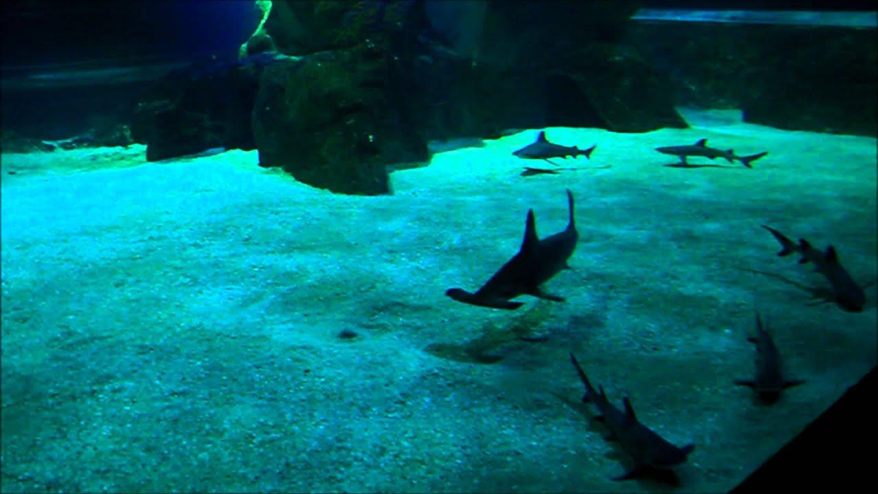 Mus E De La Mer Aquarium Biarritz 30 08 2011 Youtube
