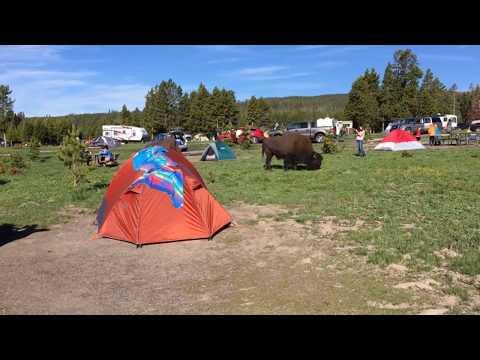 Yellowstone National Park June 20, 2017