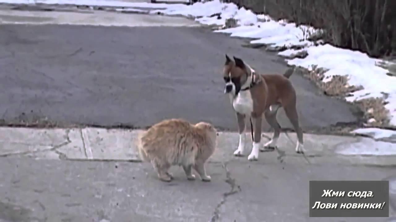 знакомство кота с собакой