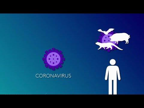 Science - Le Coronavirus au microscope