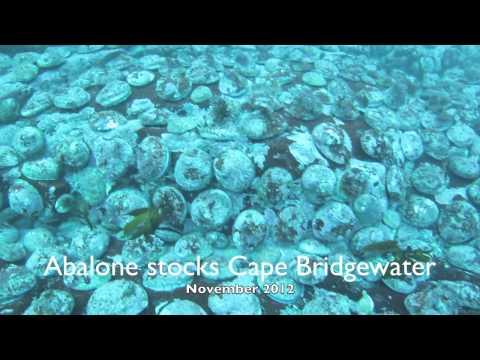 Abalone- Cape Bridgewater