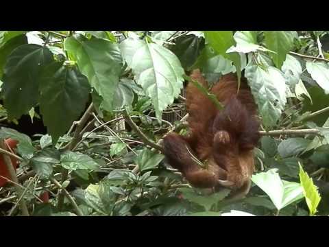 Animal Rescue Centre, Costa Rica 2013