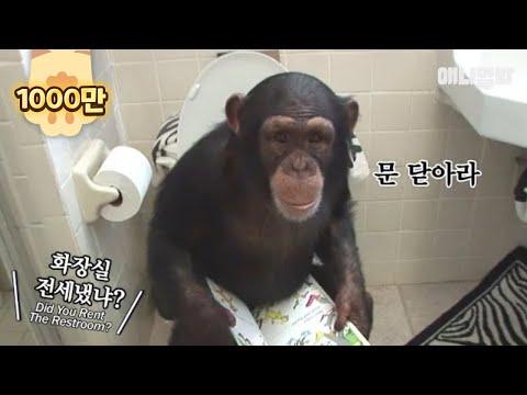 鞐姁 臧�鞝曥鞚� 頋旐暅 鞎勳龚 頀嶊步 銋� Ordinary Morning Scenery Of A Family With Chimpanzees