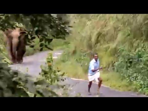 Elephant attack in Gavi, Kerala