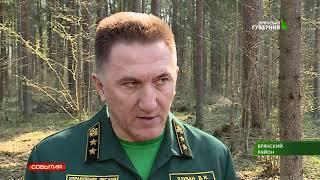 Всероссийский день посадки леса 25. 04 .19
