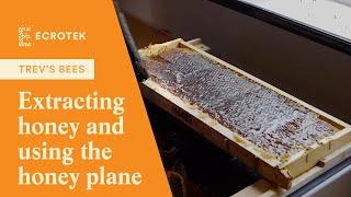 plane - Honey