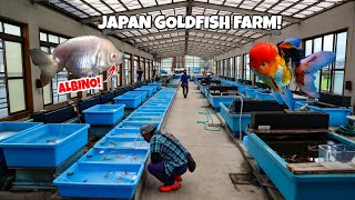 HUGE GOLDFISH FARM Tour in Japan!
