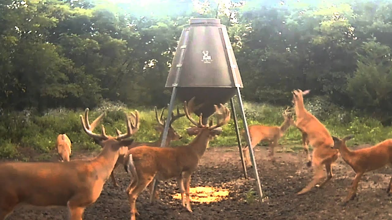 watch buck feeders crush bucks boss cam bachelor feeder youtube deer live v