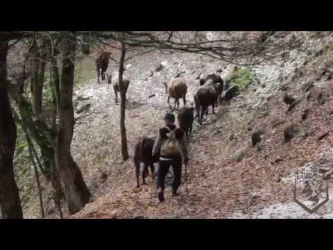 Çoban qardaş
