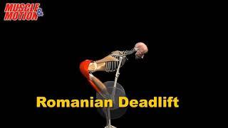 видео Румынская становая тяга на прямых ногах
