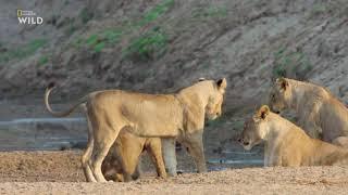 Африканские охотники 3 сезон 1 серия Восхождение Кимбы