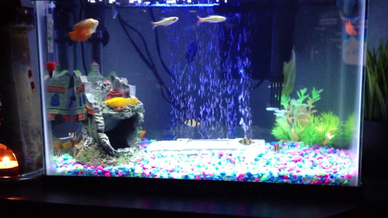 Aquarium fish 5 gallon tank - 5 Gallon Freshwater Tank With Led Air Stone And Moonlight Happy Happy Happy