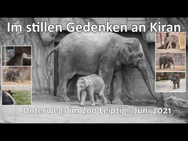 Unvergessen Kiran der kleine Elefantenbulle - Unterwegs im Zoo Leipzig - Juni 2021 - SEL200-600G