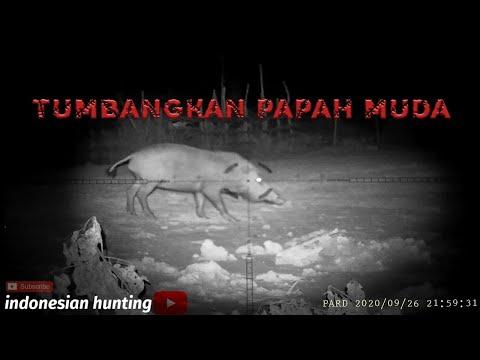 Hunting Wild Boar || Berburu Hama Babi Hutan Di Kalimantan - Eps 4