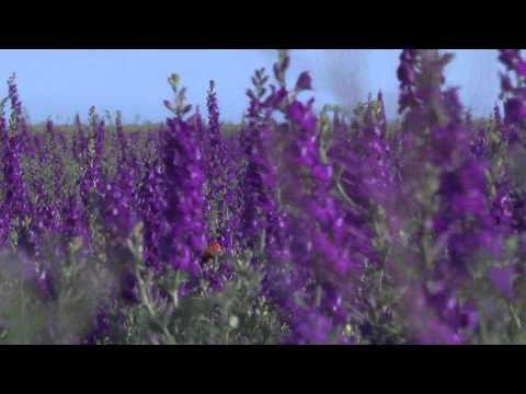 Video about natural medicinal factors resort Yevpatoriya