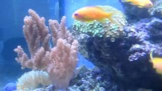 Морской аквариум в Блокбастере, Киев(, 2011-04-24T20:14:54.000Z)