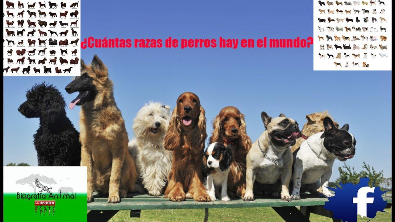 Tú Sabias Cuántas Razas De Perros Hay En El Mundo Biografía Animal Youtube