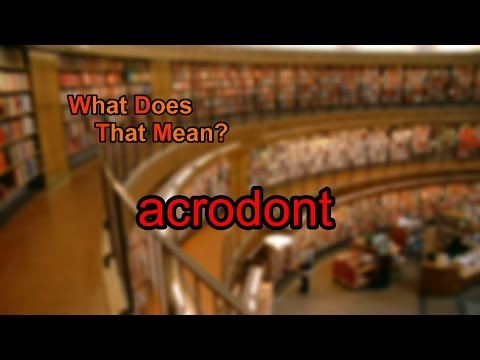 What does acrodont mean?