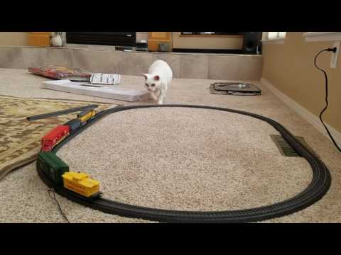 Devon Rex vs. Train