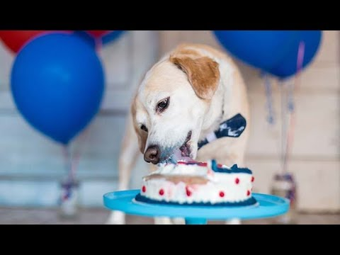 Homemade Healthy Dog Birthday Cake Recipe Easy And Simple To Make