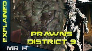DISTRICT 9 PRAWNS - Explained