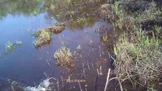 Ловля щуки на спиннинг блесной колебалкой атом незацепляйка,видео rybachil ru