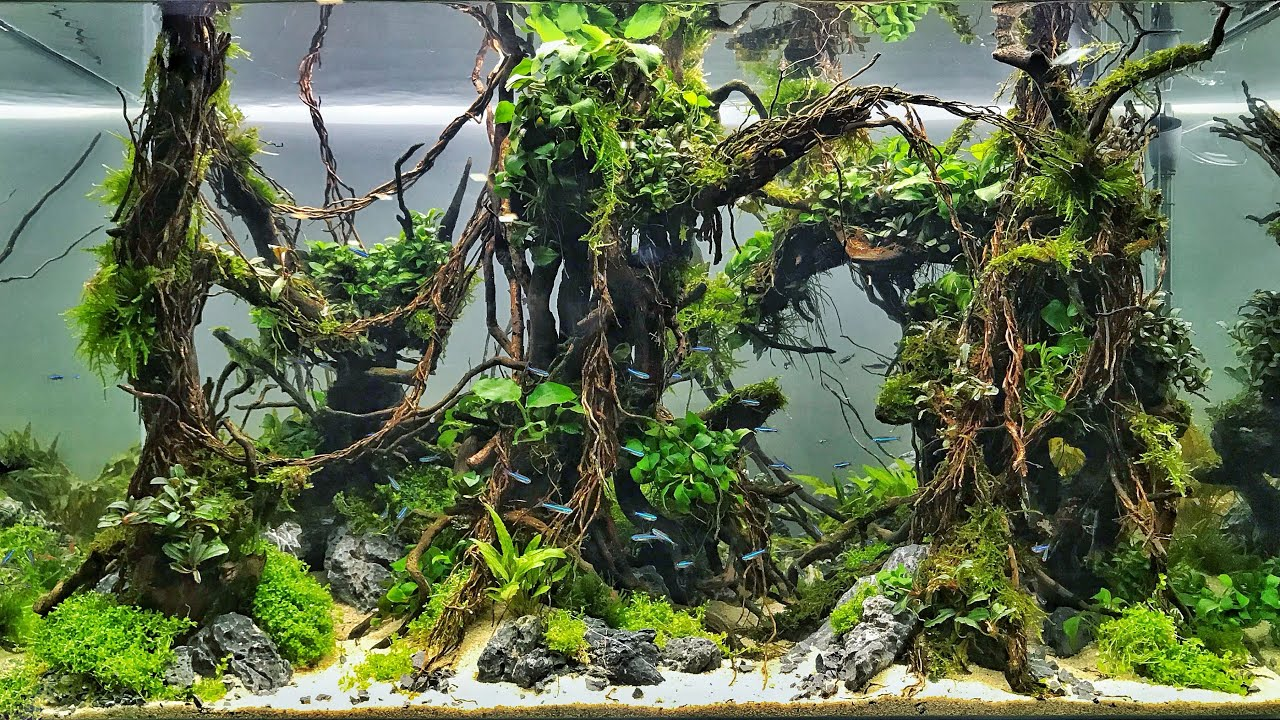 The Best Aquascapes At Aquatic Experience 2018 Youtube