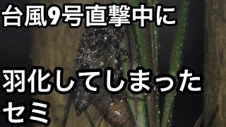 個人的趣味的な記録として沖縄の台風情報を投稿します。 詳細情報正確な...