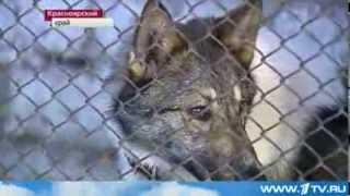 Концлагерь для собак в Красноярске